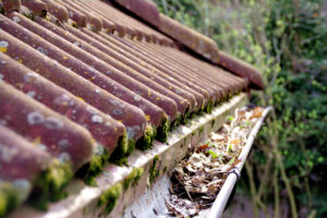Dirty Gutters and Shingles