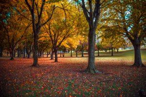 Pennsylvania Forest Fall