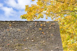 Old roof in the fall with yellow leaves falling on it